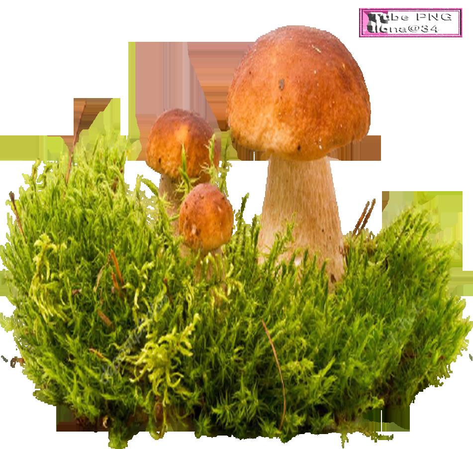 Tube champignon
