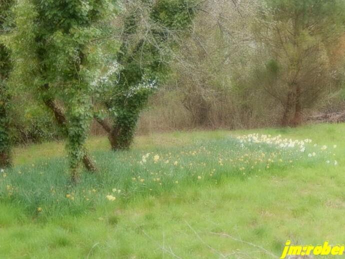 Une balade nature sur fond jaune ou blanc....
