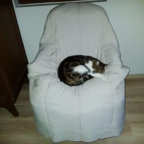 Chats dormeurs