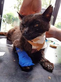 Trois amis des chats agressés violemment à Bruxelles aux Marolles !