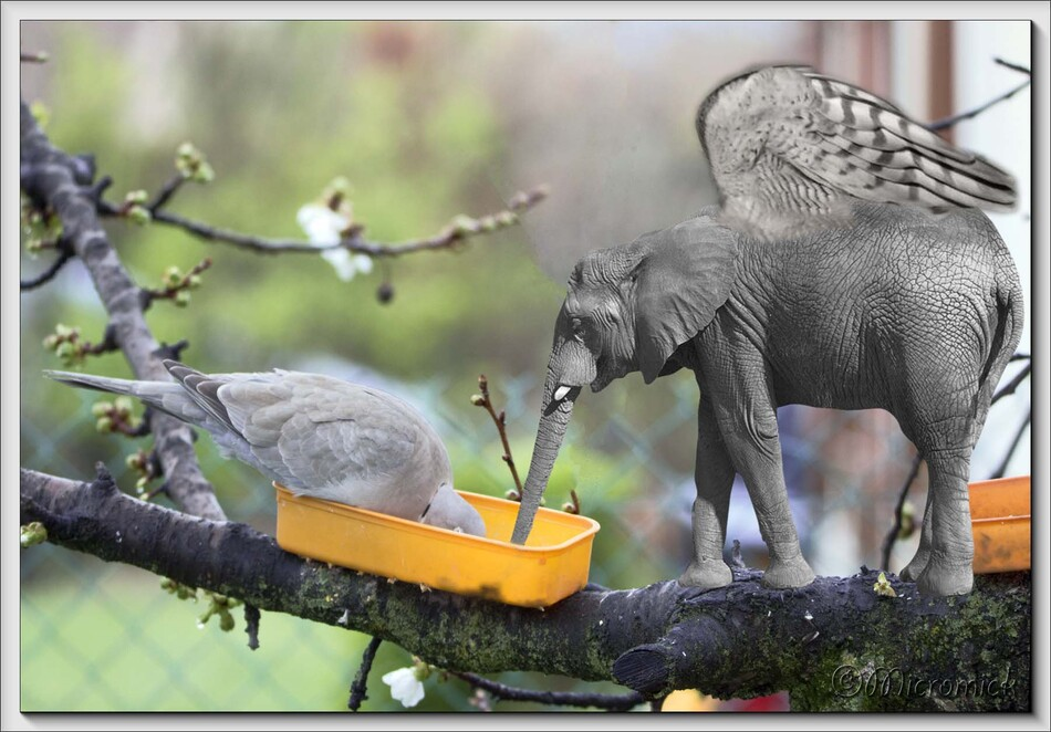 Un éléphant dans mon cerisier