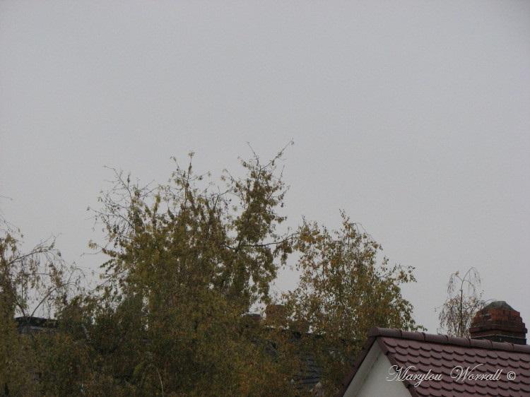 Ciel d'Alsace 291
