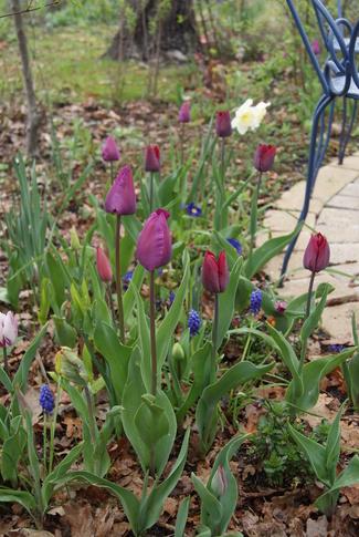 Tulipes de la chambre de verdure
