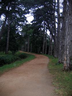 Chemin d'Arles 2008- Montferrand (37km)