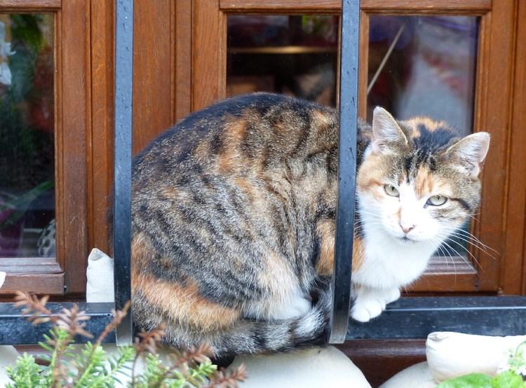 A fréquenter les chats... on ne risque que de s'enrichir !! Colette