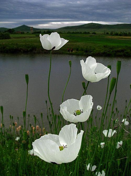 pour vous ces fleurs