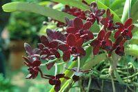 Fleurs tropicales et orchidées