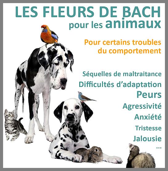 """Résultat de recherche d'images pour """"fleurs de bach pour animaux"""""""
