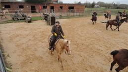 Stage tri de bétail 28 février Ranch de l'Oison