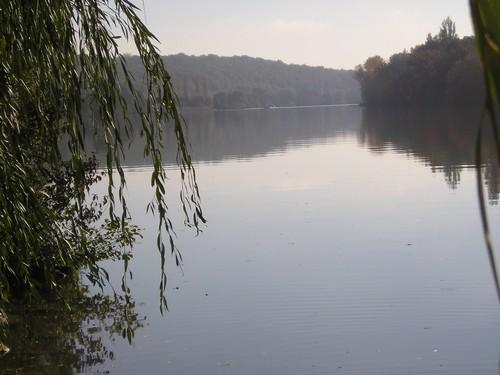 De la forêt à la Seine