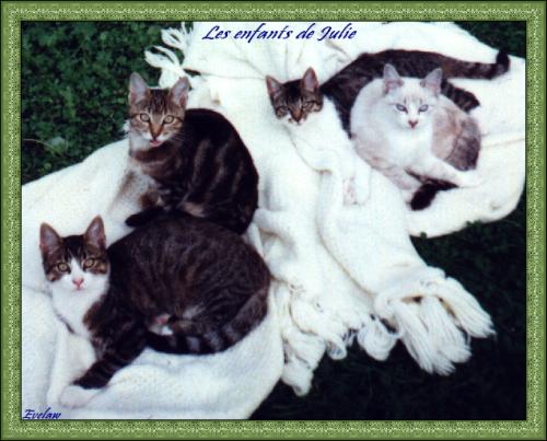 Mes chats bébés