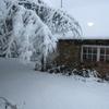 neige jardin 8déc2010 (6).jpg