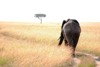 Elephant3_thumb