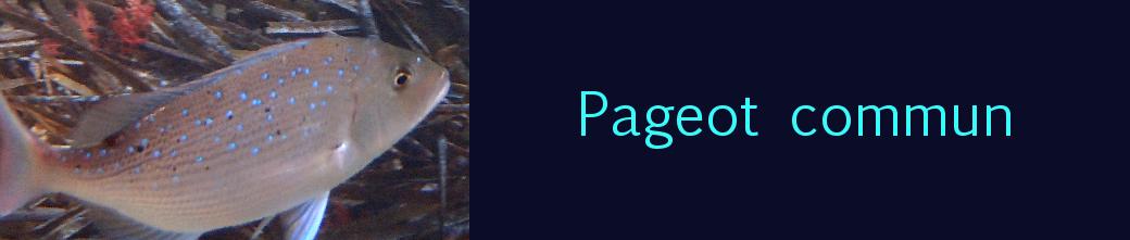 pageot commun