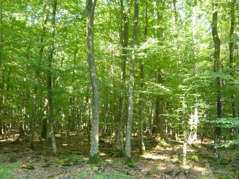 Forêt tempérée décidue au printemps, Picardie