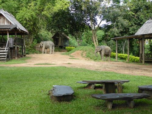 J8, alentours de Luang Prabang, éléphants, Laos