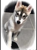 Nala (2,5 mois)