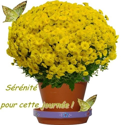 """Fleur """"d'immortalité"""" ..."""