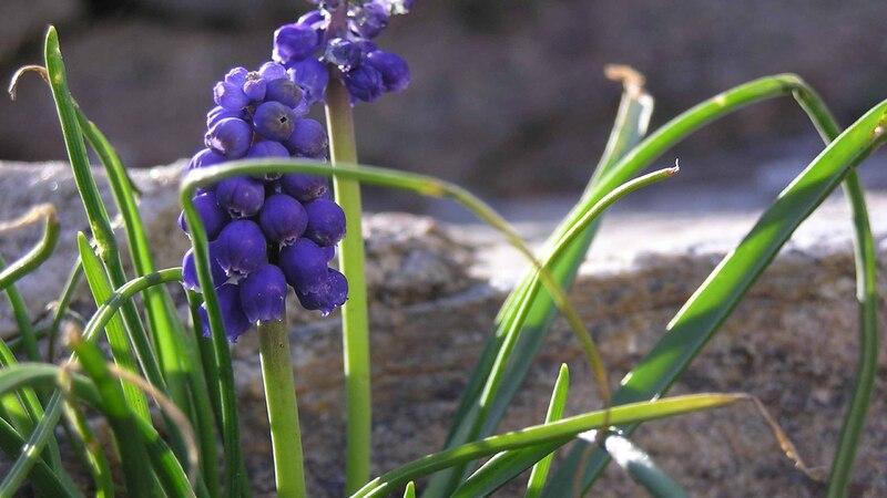 20 images de fleurs #1