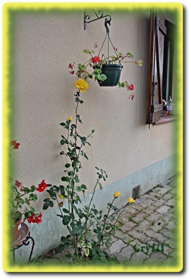 Place aux fleurs !