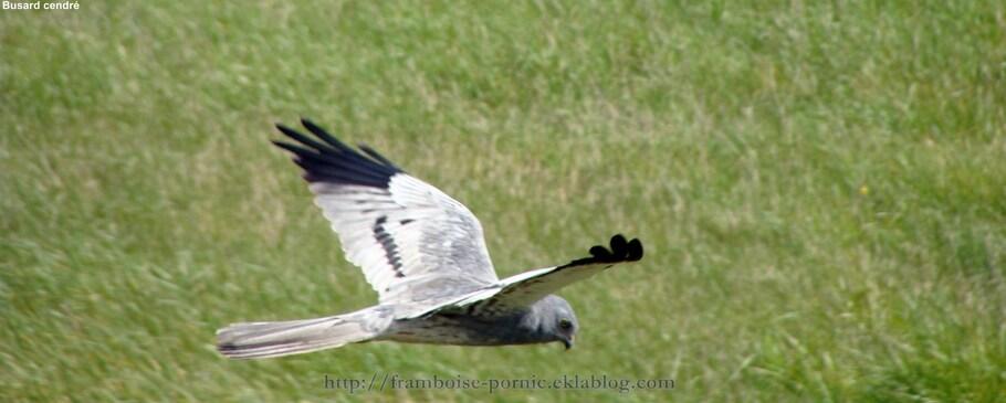 Les oiseaux au gré de mes balades Nature