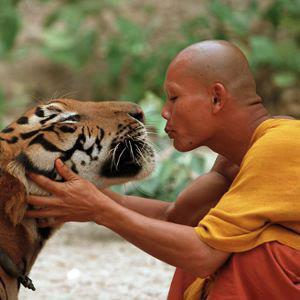 Communication animale - Regard sur un Autre Monde - Médimunité