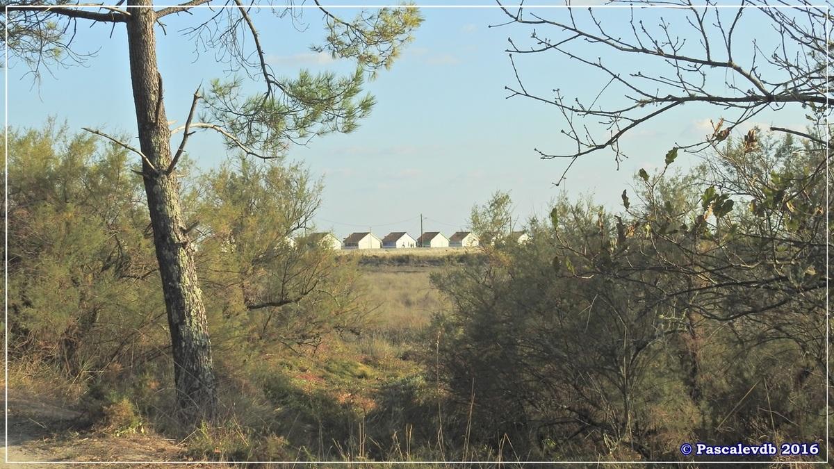 Arès : sa jetée, ses prés salés et son port ostréicole - Octobre 2016 - 7/11