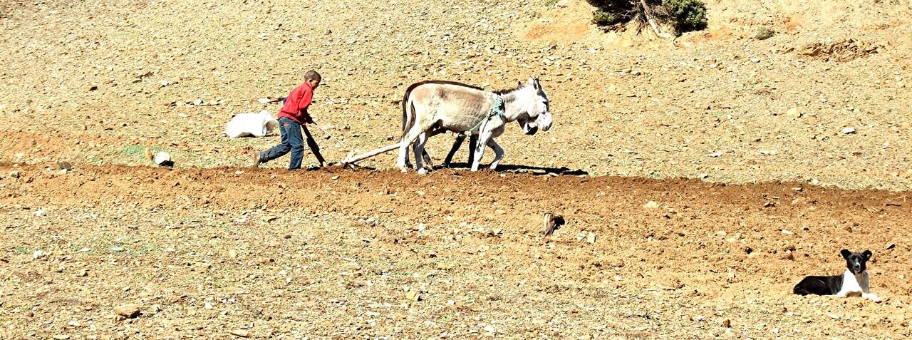 Maroc 7 / Tranches de vie dans le Ht Atals (1)