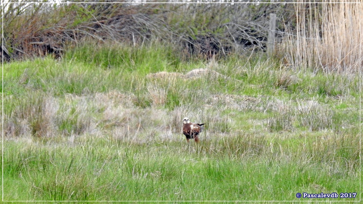 Réserve ornitho du Teich - Mars 2017 - 10/15