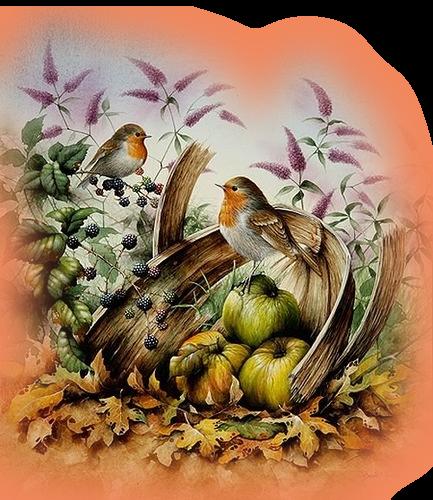 Tubes misted oiseaux