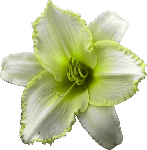 Fleurs Têtes Série 8