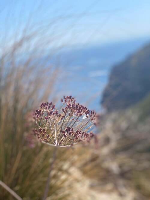 majorque - nord de l'île - les alentours d' Alcudia