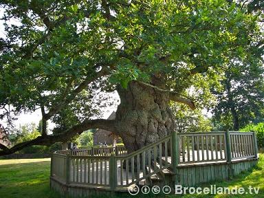 Balades autour des plus vieux arbres de Bretagne ...