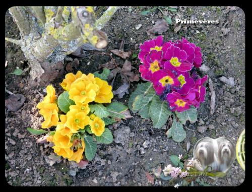 ♥ le jardin ♥