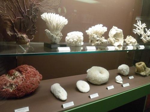 Musée d'Histoire Naturelle
