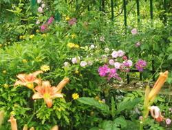 Le Jardin de Claude Monet