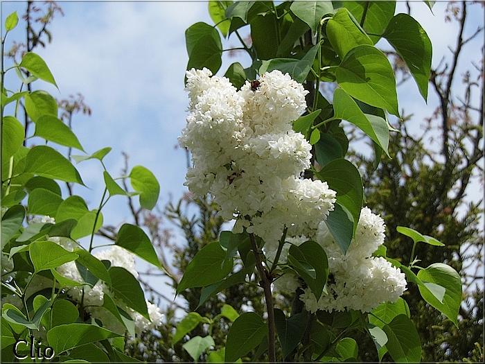 Des fleurs du jardin ... pour vous  -:)