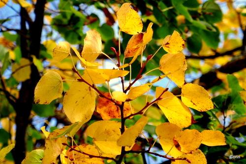Feuille jaune d'automne