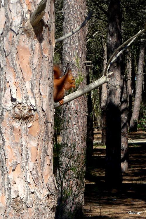 La pause écureuil !