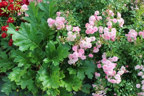 Nouvelles images du jardin