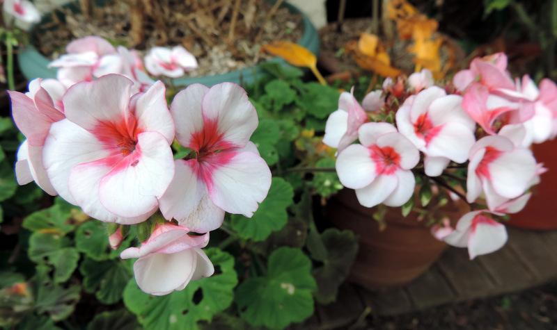 Fleurs de décembre...