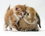 C'est pas un chat, c'est un lapin !