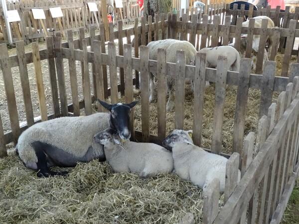 L'agriculture aux Journées Châtillonnaises 2015...