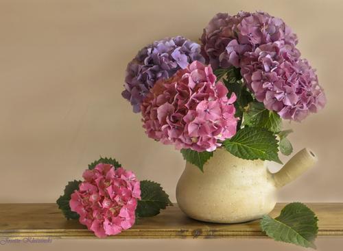 Fleurs de Bretagne.