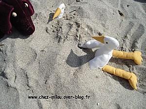Bilo et Loba en Bretagne12