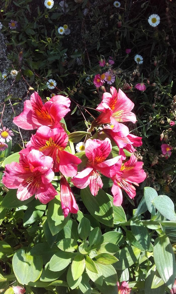 Délices de fleurs ( la promeneuse )