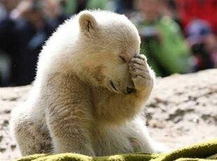 Adorably Sad Animals: