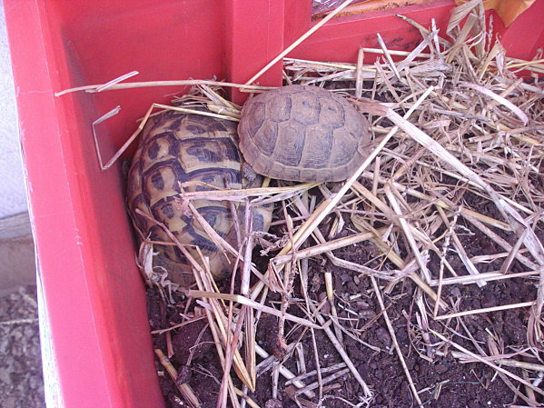 tortues---catrice-etc-001.JPG