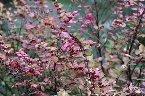 Touches d'automne au jardin