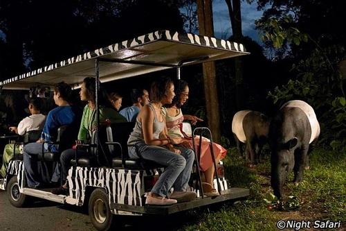 Le Night Safari de Singapour